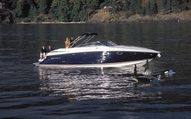 24814 2011 Cobalt Cuddies Cruisers 323